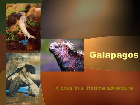 Galapagos A once in a lifetime adventure. An archipelago of islands.