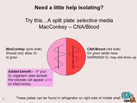 1 Need a little help isolating? Try this…A split plate selective media MacConkey – CNA/Blood CNA/Blood (red side) G+ grow better here WARNING! G- may.