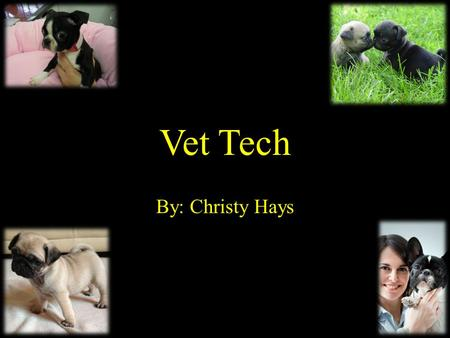 Vet Tech By: Christy Hays. Nature of Work While veterinary technicians perform tasks such as administering medication and preparing animals for surgery,