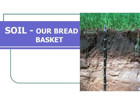 SOIL - OUR BREAD BASKET. INDEX What is soil? What is the importance of soil? What are the different layers of soil? How does soil form? What is calcification.