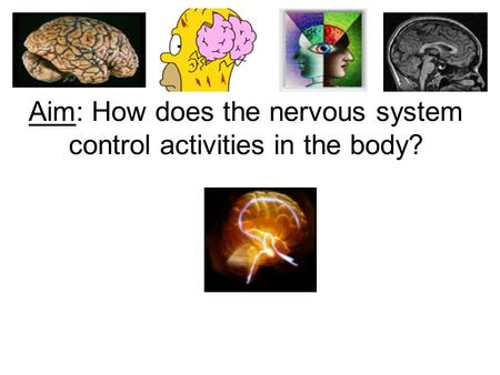 Aim: How does the nervous system control activities in the body?