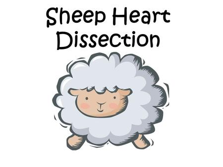 Sheep Heart Dissection. Objectives By the end of this lesson, students will be able to: Demonstrate proper dissection safety techniques Identify the right.