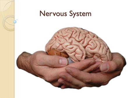 Nervous System. Meet Your Nervous System You have about 150 billion brain cells Your brain is about 2% of your body's weight, but it uses about 20% of.