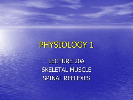 PHYSIOLOGY 1 LECTURE 20A SKELETAL MUSCLE SPINAL REFLEXES.