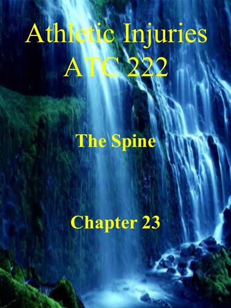 Athletic Injuries ATC 222 The Spine Chapter 23 Anatomy Vertebral Column –7 cervical vertebra –12 thoracic vertebra –5 lumbar vertebra –5 sacral vertebra.