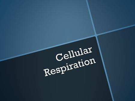 Cellular Respiration. What does respiration mean to you?