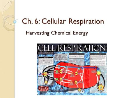 Ch. 6: Cellular Respiration Harvesting Chemical Energy.