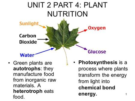 1 UNIT 2 PART 4: PLANT NUTRITION Photosynthesis is a process where plants transform the energy from light into chemical bond energy. Green plants are autotrophs: