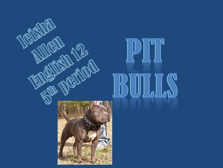 Should people be allowed to have pit bulls?