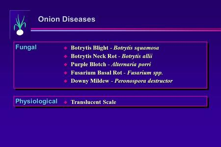 Onion Diseases Fungal Physiological  Translucent Scale  Botrytis Blight - Botrytis squamosa  Botrytis Neck Rot - Botrytis allii  Purple Blotch - Alternaria.