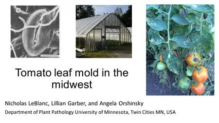 Tomato leaf mold in the midwest Nicholas LeBlanc, Lillian Garber, and Angela Orshinsky Department of Plant Pathology University of Minnesota, Twin Cities.
