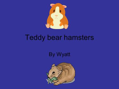 Teddy bear hamsters By Wyatt. Table of Contents Page 1-3 Interesting Facts Page 4 Babies Page 5 Food Page 6 Habitat Page 7 Enemies Page 8 Description.