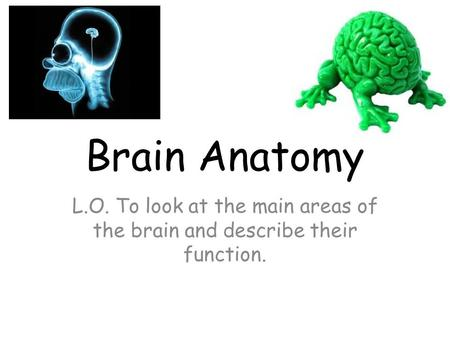 Brain Anatomy L.O. To look at the main areas of the brain and describe their function.