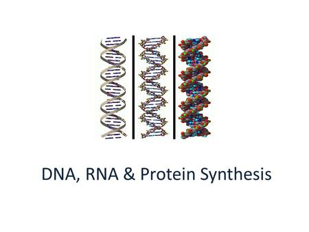 DNA, RNA & Protein Synthesis. A. DNA and the Genetic Code 1. DNA controls the production of proteins by the order of the nucleotides.