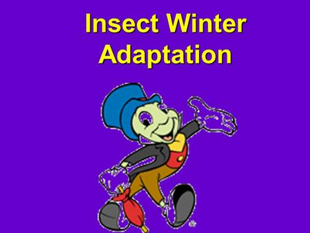 Insect Winter Adaptation. How Do Bugs Survive? Hibernate produce glyceraol (natural antifreeze)Hibernate produce glyceraol (natural antifreeze) Hide outHide.