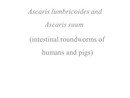 Ascaris lumbricoides and Ascaris suum (intestinal roundworms of humans and pigs)