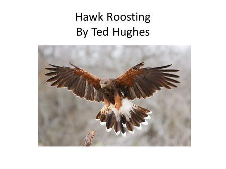 Hawk Roosting By Ted Hughes. I sit in the top of the wood, my eyes closed. Inaction, no falsifying dream Between my hooked head and hooked feet: Or in.
