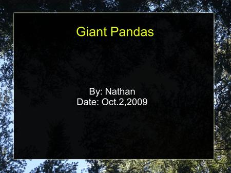 Giant Pandas By: Nathan Date: Oct.2,2009. Introduction Most people think giant pandas are cute and cuddly but there's more to them then their looks. Did.
