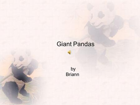 Giant Pandas by Briann Here are some amazing facts about pandas. Giant Pandas generally live in China. They have 1 or 2 cubs at a time. Cubs weigh only.