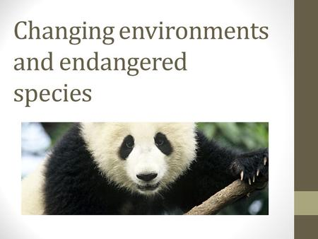 Changing environments and endangered species. 5 interesting facts about pandas. 1.The life span of giant pandas in the wild is approximately 20 years.