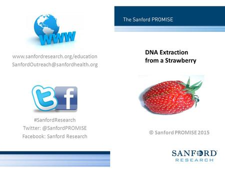 DNA Extraction from a Strawberry © Sanford PROMISE 2015 #SanfordResearch Facebook: Sanford Research