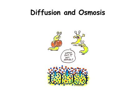 Diffusion and Osmosis. Outline Learn the concepts of: –Diffusion, osmosis, semi-permeable membrane, isotonic, hypertonic, & hypotonic Explore diffusion.
