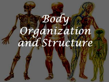 Body Organization and Structure. Believe it or not, you are organized!  The main levels of organization.