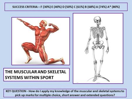 KEY QUESTION - How do I apply my knowledge of the muscular and skeletal systems to pick up marks for multiple choice, short answer and extended questions?