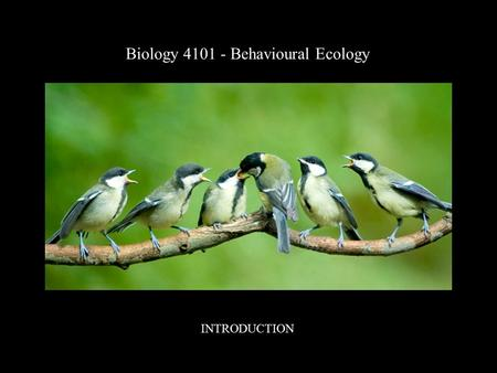 Biology 4101 - Behavioural Ecology INTRODUCTION. A course to explore the relationships between animal behaviour and ecology, emphasizing the behavioural.