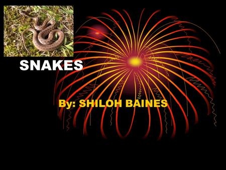 SNAKES By: SHILOH BAINES. DO YOU THINK SNAKES ARE INTERESTING? IF SO, READ TO FIND OUT MORE ABOUT THEM.