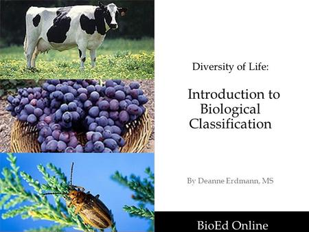 BioEd Online Diversity of Life: Introduction to Biological Classification By Deanne Erdmann, MS BioEd Online.