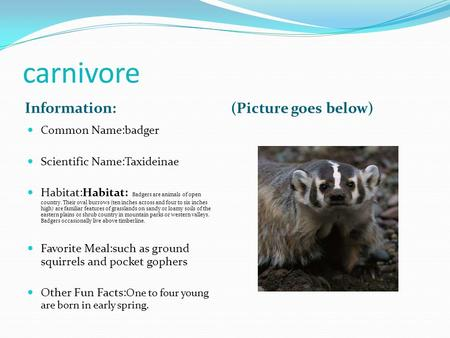 Carnivore Information: (Picture goes below) Common Name:badger Scientific Name:Taxideinae Habitat:Habitat: Badgers are animals of open country. Their oval.