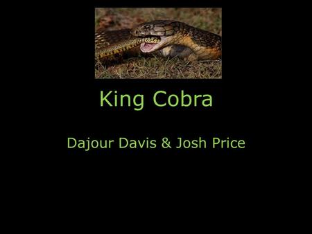 King Cobra Dajour Davis & Josh Price. Common Name and Scientific Name Scientific NameCommon Name Ophiophagus hannahKing Cobra.