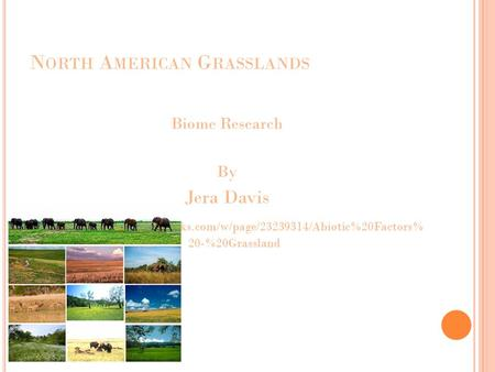 N ORTH A MERICAN G RASSLANDS Biome Research By Jera Davis  grmsbiomes.pbworks.com/w/page/23239314/Abiotic%20Factors% 20-%20Grassland.