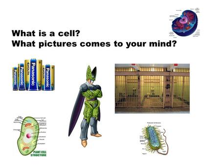 What is a cell? What pictures comes to your mind?.
