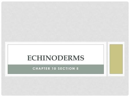CHAPTER 10 SECTION 5 ECHINODERMS. CHARACTERISTICS OF ECHINODERMS Phyla: Echinodermata Characteristics Invertebrates Internal skeleton Water vascular system.