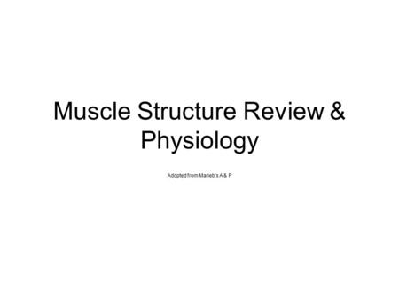 Muscle Structure Review & Physiology Adopted from Marieb's A & P.