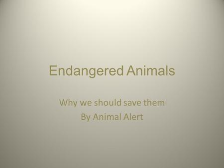 Endangered Animals Why we should save them By Animal Alert.