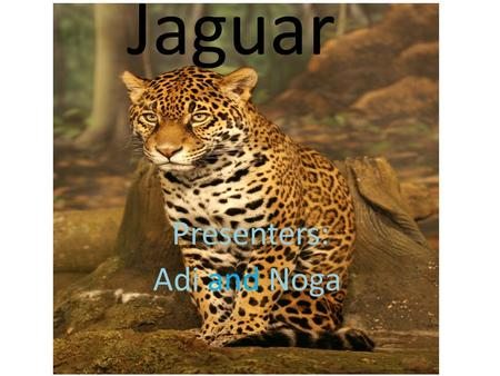 Jaguar Presenters: Adi and Noga. Were does the Jaguar lives? The jaguar lives in: Mexico Central America South America Amazon area in Brazil Green: present.