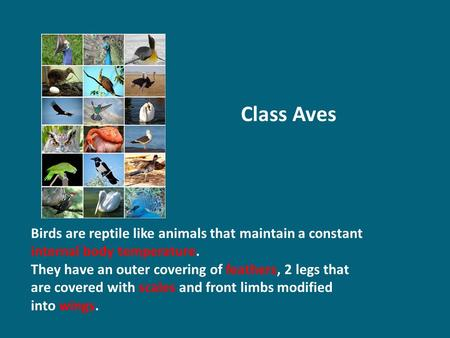 Class Aves Birds are reptile like animals that maintain a constant