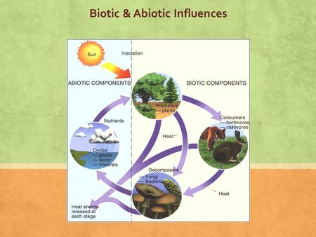 Biotic & Abiotic Influences. Ecosystem: all the living organisms that share a region & their physical & chemical environment.
