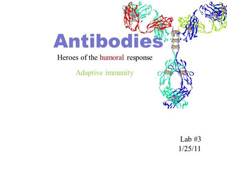 Antibodies Heroes of the humoral response 1/25/11 Lab #3 Adaptive immunity.