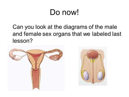 Do now! Can you look at the diagrams of the male and female sex organs that we labeled last lesson?