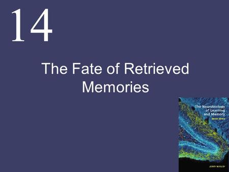 14 The Fate of Retrieved Memories. Chapter Goals Under some conditions, retrieving or reactivating a consolidated memory can return it to an active, labile.