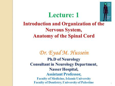 Lecture: 1 Introduction and Organization of the Nervous System, Anatomy of the Spinal Cord 1 Dr. Eyad M. Hussein Ph.D of Neurology Consultant in Neurology.
