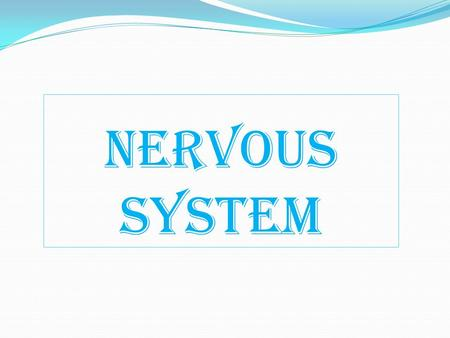 Nervous System. Classification Based on General Functions Nervous System Somatic Nervous System Autonomic Nervous System SympatheticParasympathetic.