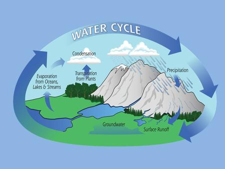 Z. The water cycle involves three major processes: evaporation, condensation, and precipitation. condensation: The process by which a gas changes into.