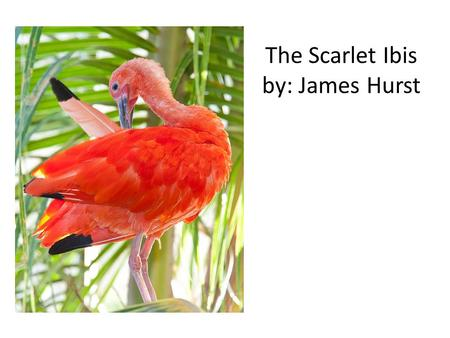 an analysis of the scarlet ibis a short story by james hurst The scarlet ibis is a short story written by novelist james hurst it was first  published in the  contents [hide] 1 plot 2 analysis 3 opera 4 james hurst 5  references 6 external links.