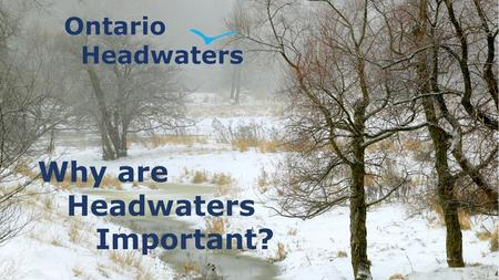 Why are Headwaters Important?. Before we start, just a reminder from What are Headwaters? … In general, headwater streams are 1 st, 2 nd, and 3 rd order.