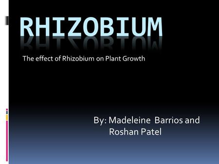 The effect of Rhizobium on Plant Growth By: Madeleine Barrios and Roshan Patel.